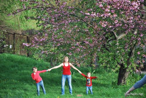 Ботанічний сад імені Гришка Цвітуть магнолії InterNetri  Ukraine 185