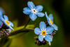 Had to sneak up on them (langdon10) Tags: canada canon70d macro novascotia tamron90mm flower flowers outdoors
