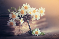 Happiness is the key (Ro Cafe) Tags: stilllife flowers daisies key book vintage rustic soft cheerful hopeful colorful spring set up arrangemet textured nikkormicro105f28 nikond600 softfocus