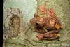 Harlequin Flying Tree Frog (Rhacophorus pardalis) (Steven Wong (ATKR)) Tags: harlequin flying tree frog rhacophorus pardalis steven wong siew por atkr45 stryker wsp atkr herp herping malaysia