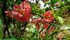 02-DSC05518 (Nowiny z Monachium) Tags: münchen ogródróż rosengarten bäumen giftpflanzen isarauen sträu