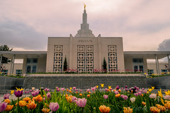 Idaho Falls Temple in Spring (Cramer Imaging) Tags: photo photography photograph outdoor outdoors nature natural architecture building temple idahofalls idaho idahofallstemple spring springtime flower flowers tulip tulips plant plants sky cloud clouds perspective pink yellow white grey gray religion religious worship angel angelmoroni steeple
