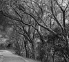 guide posts (fromkmr) Tags: sonya99ii lakechabotregionalpark ebparksok castrovalleyca hiking trees path monochrome