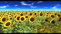 lyrics in English     Liquid mokka Sun flower  limited time promo  (rikutojam2) Tags: andalusia sunflower summer caderu rikutojam liquid mokka