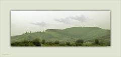 BRUMA SOBRE MIS PRADOS (Angelines3) Tags: primavera prados bruma nwn nubes árboles hierba martesdenubes