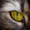 Eye sea U (bullesan64) Tags: cat eye macro look