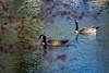 I see you too ... (mariola aga) Tags: park river water tree branch birds bokeh nature thegalaxy