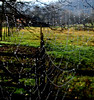 Rural idyll (Sappho et amicae) Tags: landscape raindrops cobweb sapphoetamicae