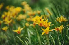 in the field (kderricotte) Tags: sony sonya7ii sony85mm18 bokeh flower garden brooksidegardens maryland wheaton depthoffield field grass outdoor plant sel85f18 ilce7m2