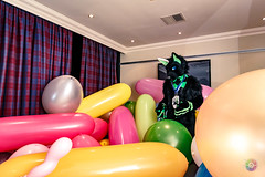 Balloon Party - March-31-2018-2041'57-IMG_8155 (SGT.Tibbs) Tags: 31032018 balloonparty bristolfilton convention furries furry furryculture fursuits hobby holidayinn justfurtheweekend lgbtqia people subculture
