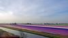 Hollande Méridionale : champs de jacinthes (bernarddelefosse) Tags: jacinthe champ hollandeméridionale paysbas paysage fleurs