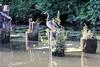 DSC_5251 Alte Holzpfähle / Reste von Holzdalben im Billekanal von Rothenburgsort - eine Ente sitzt auf dem Holzpflock in der Sonne am Wasser - aus dem vermoderten Holz wächst Wildkraut und kleine Bäume. (christoph_bellin) Tags: alte holzpfähle reste holzdalben billekanal enten ente sonne wasser kanal kanäle rothenburgsort hamburg stadtteile bezirk mitte hansestadt hafen arbeit hafennutzung wasserweg foto bild relikt hafenrelikt