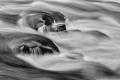 Rolling Down The River (chasingthelight10) Tags: events photography travel landscapes rivers forests waterfalls places washingtonstate olympicnationalpark solduc solducriver otherkeywords river riparianhabitat