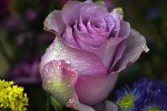 Floral Fantasy (Rachela B) Tags: rose lilac droplets bouquet spring petals