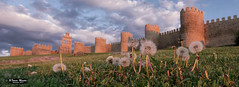 Ávila. (Tomás Martín.) Tags: avila muralla medieval dientedeleon ciudad verde green hierva puestadesol ciudadamurallada