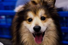 Sweet Dog #dog #sweet #50mm #canon #portrait #perrito #spain (roberto1998771) Tags: portrait canon sweet spain perrito 50mm dog