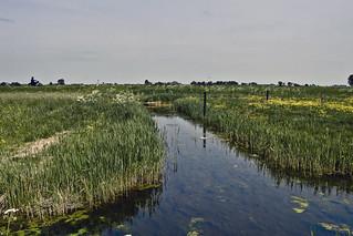 Frysian landscape near Hindeloopen ... (0230)