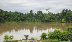 Purari River PNG (Andy.Gocher) Tags: puraririver andygocher canon100d papuanewguinea png river water trees jungle herdbase reflection