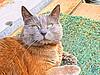 2018 - Recherches (bDom [+ 4 Mio views - + 48K images/photos]) Tags: bdom dessin art digital ipad chat cat mika félin