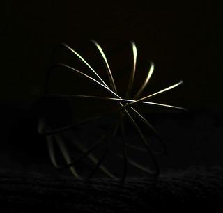 'Whisk' Low Key Light Study