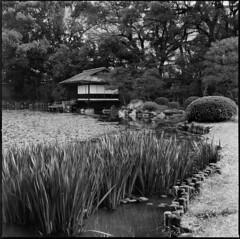 涉成園 (GrayCat50) Tags: japen kyoto しょうせいえん trees landscape hasselblad500cm bw flim bergger