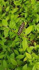 20180523_110222 (TheSlayerNL) Tags: wildlands emmen zoo dieren animals adventure wildlandsadventurezoo