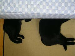 Tindra & Sam (Malmöstad) Tags: cat black cuddle katt svart djur animal sweet cute bed sofa blue feline mysa