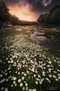 Flower Power! (jesbert) Tags: rio river bailon cordoba cabra andalusia spain españa flores flowers agua roca bosque árbol sony a7rii carl zeiss