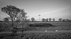 Arram Carrs_3 (Tony McLean) Tags: ©2018tonymclean arramcarrs eastyorkshire blackwhite monochrome leicamonochrom leica21mmf34superelmar