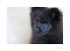 Innocence (Meu :-)) Tags: smileonsaturday eyecatcher pomeranian puppy