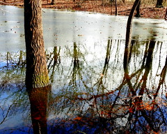 pond reflections (TerraPuella) Tags: frozen january winter pond water forest february snow ice tennesee