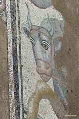 Great Baths, Dion (6).JPG (tobeytravels) Tags: alexanderthegreat alexander3rd macedon macedonia thucydides brasidas orpheus hellenistic cranicos leake thermalbaths hypocaust 2ndcenturybc mosaic asclepios thermae