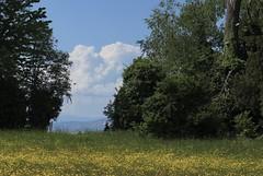 la dame au chapeau (bulbocode909) Tags: vaud suisse noville grangettes nature arbres printemps nuages fleurs forêts jaune vert bleu dames groupenuagesetciel fabuleuse