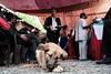 Dog at Nepali wedding (whitworth images) Tags: eating asia people wedding rural marriage red female canine dog food pokhara animal pet outdoors nepal kaski custom culture nepali village indiansubcontinent hindu