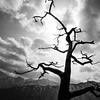 The Tree - Seoraksan, South Korea - Black and white photography (Giuseppe Milo (www.pixael.com)) Tags: photo hike landscape nature mountains outdoor korea clouds tree travel photography blackandwhite hiking sky southkorea mountain goseonggun gangwondo kr onsale