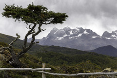 The Tree with a View (Hubert Streng) Tags: tree mountain mountainside view patagonia yendegaya tierradelfuego chile fence forest snow cloud
