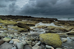At Yachats, OR (Masako Metz) Tags: beach rocks stones ocean sea water seaweed sky clouds nature landscape seascape oregon coast pacific northwest usa america outdoor rainy season