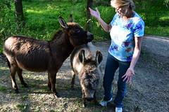 Dragon Fly Farm Donkeys 20180502 20180501  DSC_3054 Deborah (Shane's Flying Disc Show) Tags: donkeys catdragonflyfarm