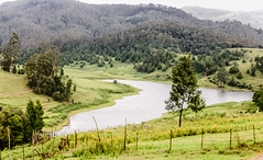 Scenic View (Balaji Photography - 4.8M views and Growing) Tags: kodaikanal tamilnadu india travel traveller tours tourism touristspots hillstation hillresort hills green greencover greenery greenforest scenic picturesque trees lawn stream mountains