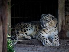 Zoo Kraków (Jacek Klimczyk) Tags: jklimczykyahoocom jacek klimczyk zoo ogród zoologiczny poland animals beautiful animal giraffe outdoor kraków bear rock mammal