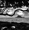 Clouds and Shoreline_Hana_Maui_1 (Ken'sKam) Tags: sea seascape surf ocean island tree sky clouds cloudy waves water rocks lavarocks hana maui hawaii bw blackandwhite monochrome
