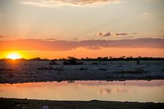 IMG_3140 (tregnier) Tags: namibia roadtrip africa travel desert animals sossusvlei leopard cheetah lion solitaire trip