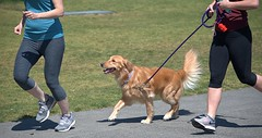 Run Run Run (Scott 97006) Tags: people exercise dog canine animal pet cute