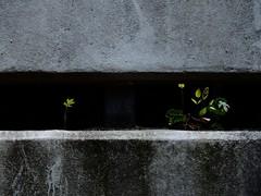 kiel_P4280256 (ghoermann) Tags: deutschland düsternbrook geo:lat=5433189052 geo:lon=1014484406 geotagged kiel schleswigholstein deu plants green spring
