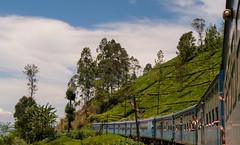 Tea Country-113 (snellerphoto) Tags: ella ellatonanuoya nanuoya srilanka tea teaplantation top20 train telegraphpole