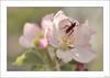 L'amour en rose (V- strom) Tags: macrophotography macrofotografía macrosdeflora macrosdefauna wildlifemacros floramacros rosa pink viñeta bulletpointverdegreenbokehpetalspétalosestambresstamensinsectoinsectpolinizaciónpollinationmarrónbrownnikonnikon 105 mmnikon d700 vstrom luz light animal flor flower planta floración flowering