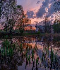 20180502DSCF3879-Pano-Edit (Gorshkov Igor) Tags: spring botanical garden blossom sakura green pink tree flowers maple red grass leaves sunset pond water reflections