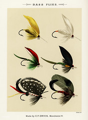 Bass Flies from Favorite Flies and Their Histories by Mary Orvis Marbury. Digitally enhanced from our own original 1892 Edition. (Free Public Domain Illustrations by rawpixel) Tags: americanartificialflies americanflypattern antique artificial artificialfly bait bass bassflies bug catch collection design drawing faded favoriteflies fishing fishingflies flies flshing fly flyfishing group handdrawn illustration insect marbury maryorvis maryorvismarbury name old pattern poster publicdomain sepia set sketch vibrant vintage