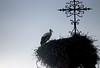 Vacances_0465 (Joanbrebo) Tags: eguisheim grandest francia fr alsace hautrhin canoneos80d eosd autofocus efs55250mmf456isstm ocells birds animales animals