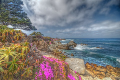 Pink Shores (Michael F. Nyiri) Tags: pacificocean pacificgrove montereyca california northerncalifornia iceplant pink clouds flowers rocks